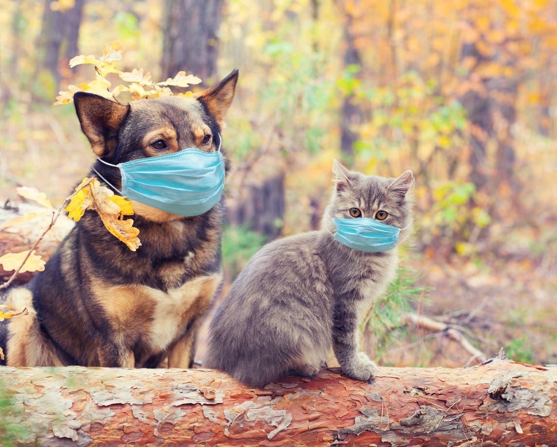 | كورونا والحيوانات مجدداً.. تحذير كندي: قد تعدوهم! مجلة ايجى فيو