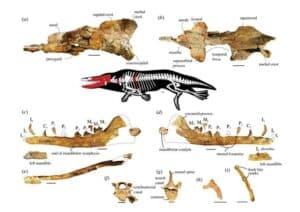 | الحفريات .. اكتشاف حوت برمائى عاش في مصر قبل ٤٣ مليون سنه