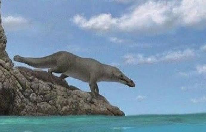 الحفريات .. اكتشاف حوت برمائى عاش في مصر قبل ٤٣ مليون سنه
